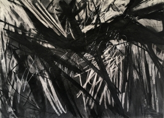 Woodland Drawing 4, charcoal with compressed charcoal and white pastel, 56 x 76cm, 2001.