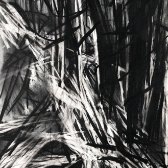 Woodland Drawing, charcoal with compressed charcoal, 76 x5 6cm, 2001.